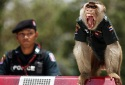 monkey police in Thailand